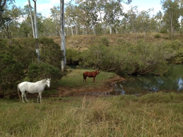 You may see cattle and horses while camping